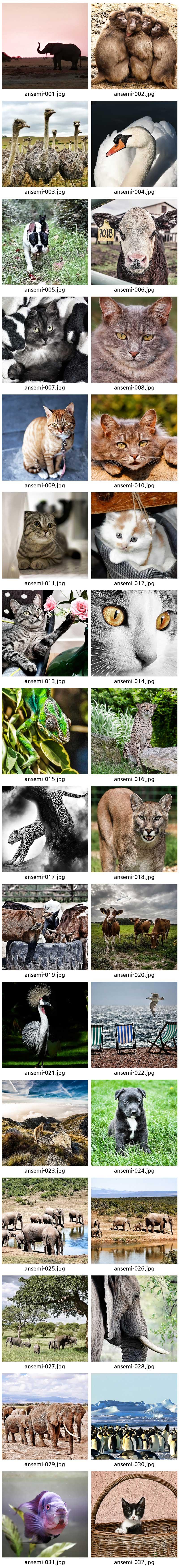 ansemi-008 못없이붙이는액자 동물 세미액자 시리즈 6x6in - 바운스프레임, 4,000원, 액자, 벽걸이액자